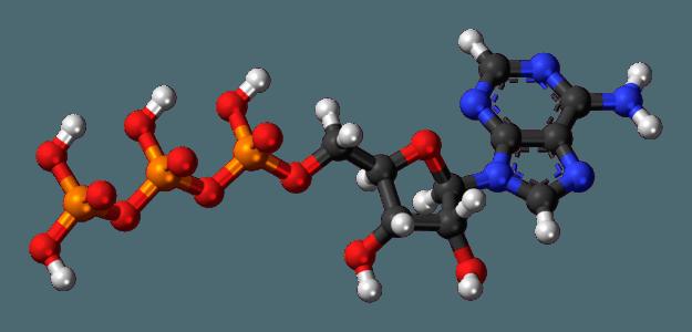 Adenosine-triphosphate-3D-balls