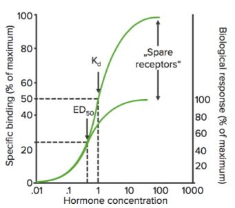 spare receptors