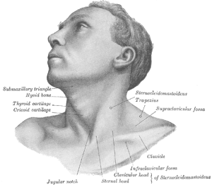 The muscles involved with torticollis