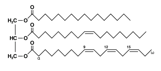 triglyceridmolecule